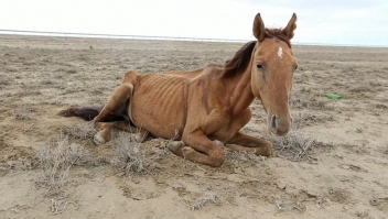 Sequía extrema azota a Kazajstán