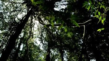 Las 5 mejores series sobre la naturaleza
