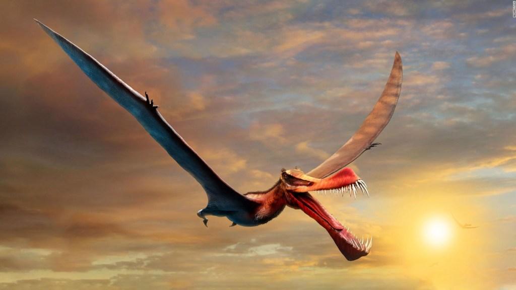 Este aterrador 'dragón' era el reptil volador más grande de Australia