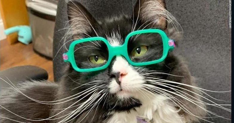 Truffles, la gatita que ayuda a niños con anteojos