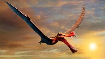 """Hallazgos revelan """"dragón"""" volador más grande de Australia"""