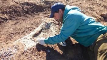 Descubren restos de un dinosaurio en Argentina