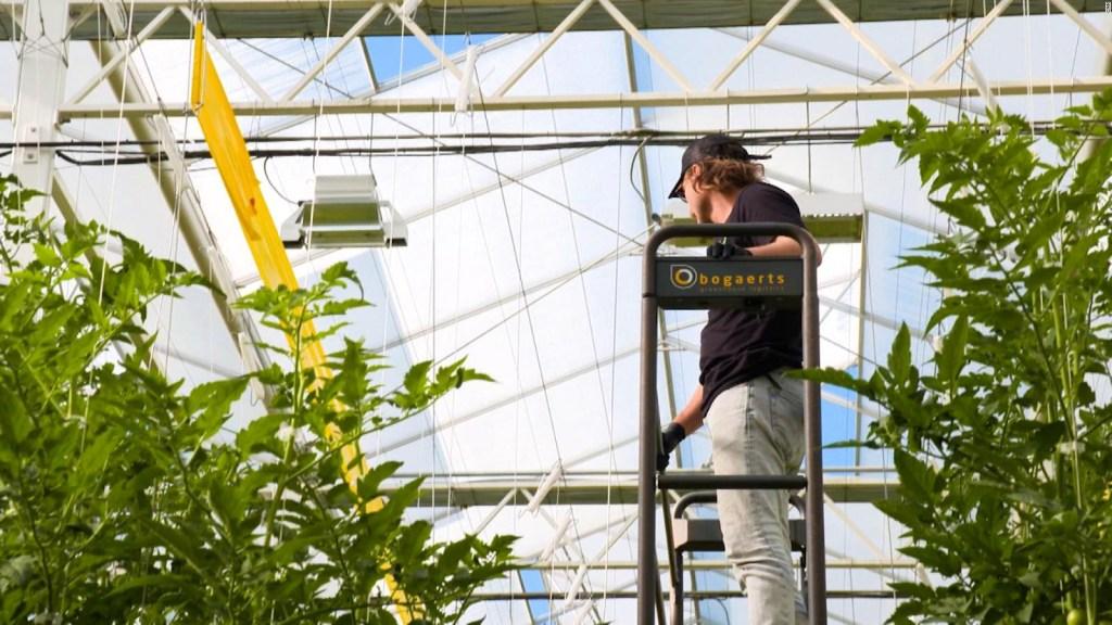 Así podría ser el futuro de la agricultura tecnológica
