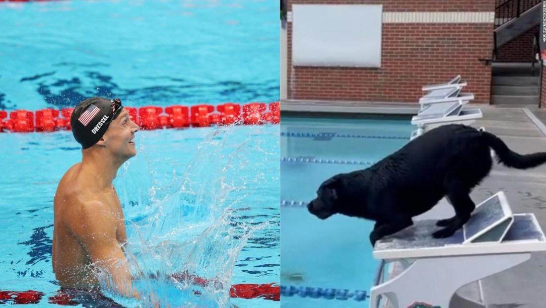 Mira cómo nada la perra del campeón olímpico Caeleb Dressel
