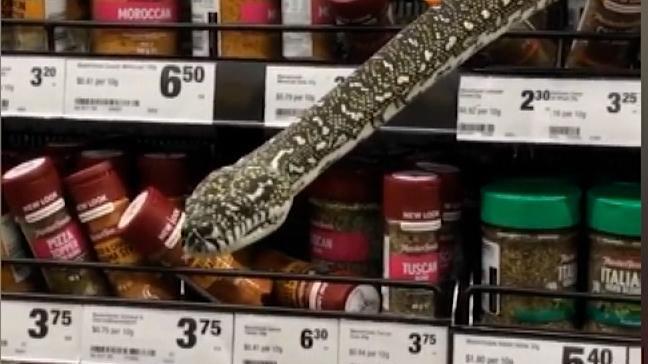Capturan a serpiente en un supermercado