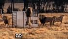 Zoológico al revés: animales libres y humanos en jaulas