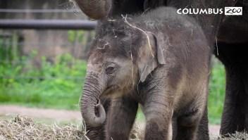 Mira cómo revelaron el nombre de este elefante bebé