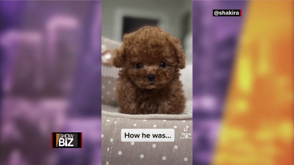 Shakira présente Teddy et Toby, ses animaux de compagnie