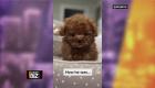 Shakira presenta a Teddy y a Toby, sus mascotas