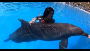 Presentadora recibe críticas tras nadar con un delfín
