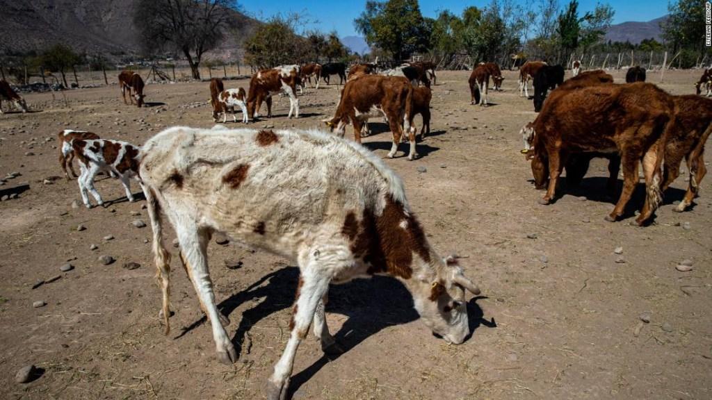 Sequía Chile Mancha Pacífico Crisis climática