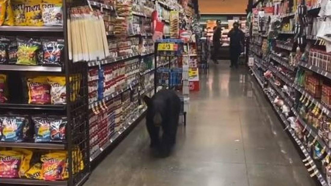 Video muestra a oso hambriento en un supermercado de Los Angeles