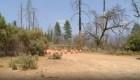 Misteriosa muerte de una familia en Yosemite