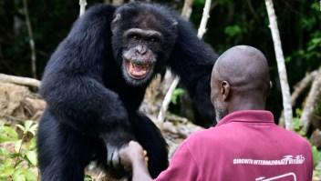 Estudio encuentra similitud entre la risa de los bebés y la de los simios
