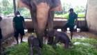 Mira a estos elefantitos gemelos recién nacidos