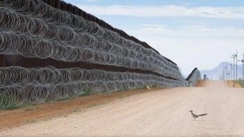 Mexicano gana premio de foto por esta ave en la frontera