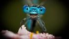 Las graciosas fotos de animales que buscan ganar premio