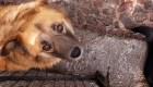 Deslave destruye albergue canino con más de 300 perros
