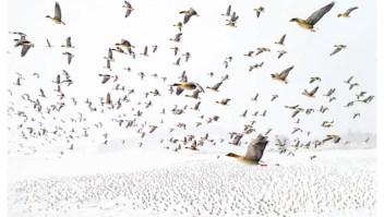 Premian a asombrosas fotos tomadas con drones
