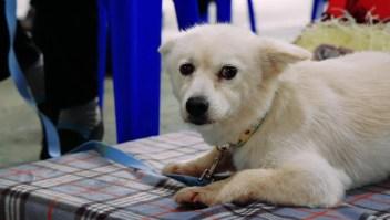Este perro héroe salvó a su dueña, una mujer de 90 años