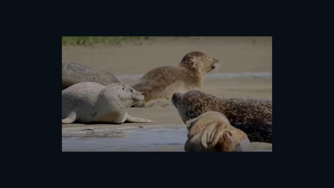 Así es cómo focas ayudan a recuperación del río Támesis