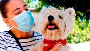 Mascotas y covid-19, ¿hay riesgo de contagio?