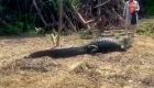 Mira la curiosa amistad entre un caimán y una persona