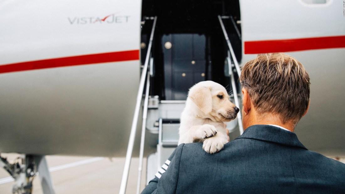 ¿Por qué más viajeros llevan a mascotas en jets privados?