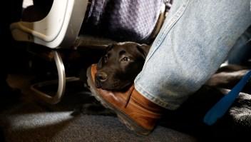 Alemania recauda millones de euros gracias a los perros