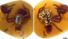 Mira los huevos de araña en ámbar de 99 millones de años