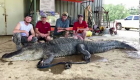 Mira qué se comió un cocodrilo en Mississippi