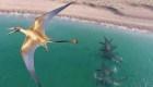 Los dragones voladores existieron, según estos científicos