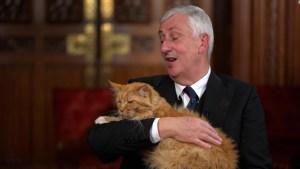 Este gato interrumpió una entrevista de CNN