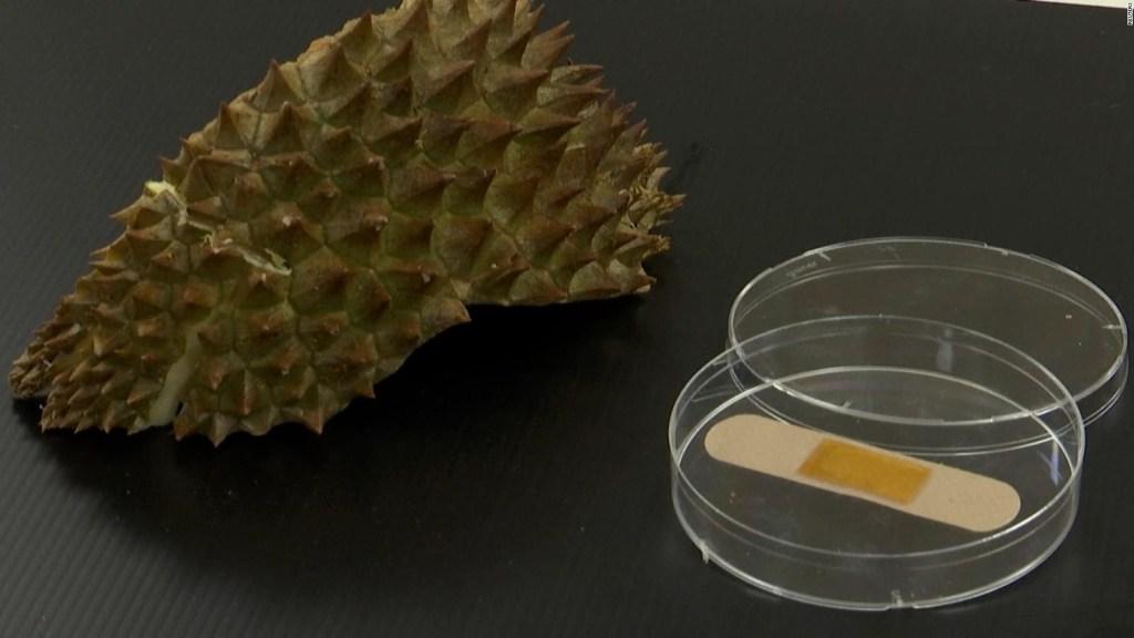 Convierten cáscara de durián en vendas de gel sanitario