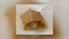 Así luce una tortuga albina en peligro de extinción