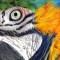 ¿Qué verdades del pasado revelan los ojos de un pájaro?