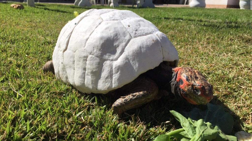Récord Guinness: un caparazón de tortuga impreso en 3D