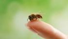 Conoce las colmenas de abejas más altas del mundo