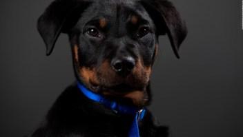 Inscribe a tu mascota para su reconocimiento legal