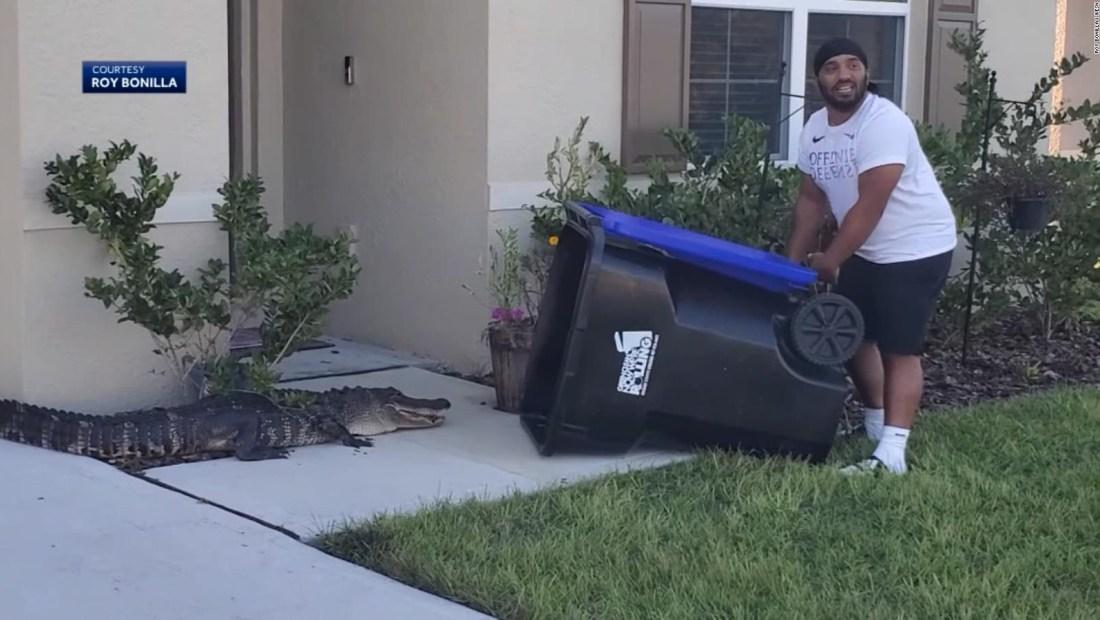 Atrapa a un caimán en la calle con un cubo de basura
