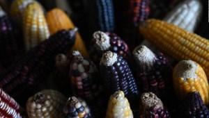 Inauguran Cencalli, el museo del maíz en Los Pinos