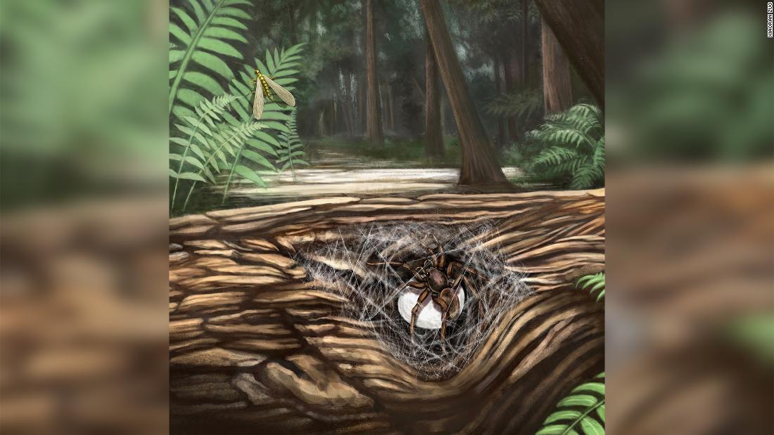 Araña ámbar prehistórica