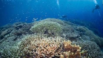 Arrecifes de coral se encuentran en peligro