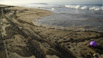 California: mancha de petróleo mata aves y peces