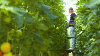 Un invernadero de EE.UU. ¿el futuro de la agricultura?