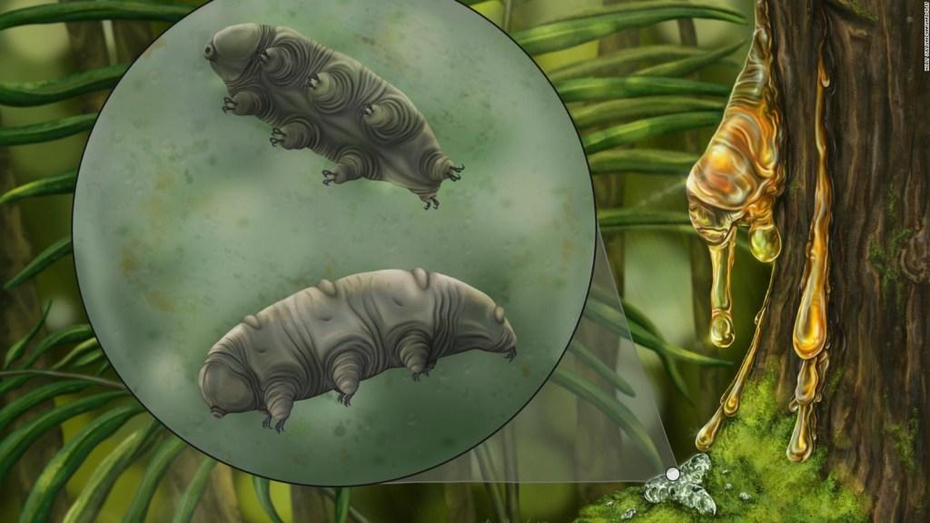 Hallan fósil de 16 millones de años en ámbar dominicano