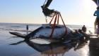 Impactantes imágenes del rescate de 2 ballenas varadas