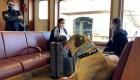 Este perro recorre todo Estambul en transporte público