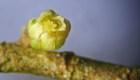 Científicos resuelven un misterio botánico tras 50 años