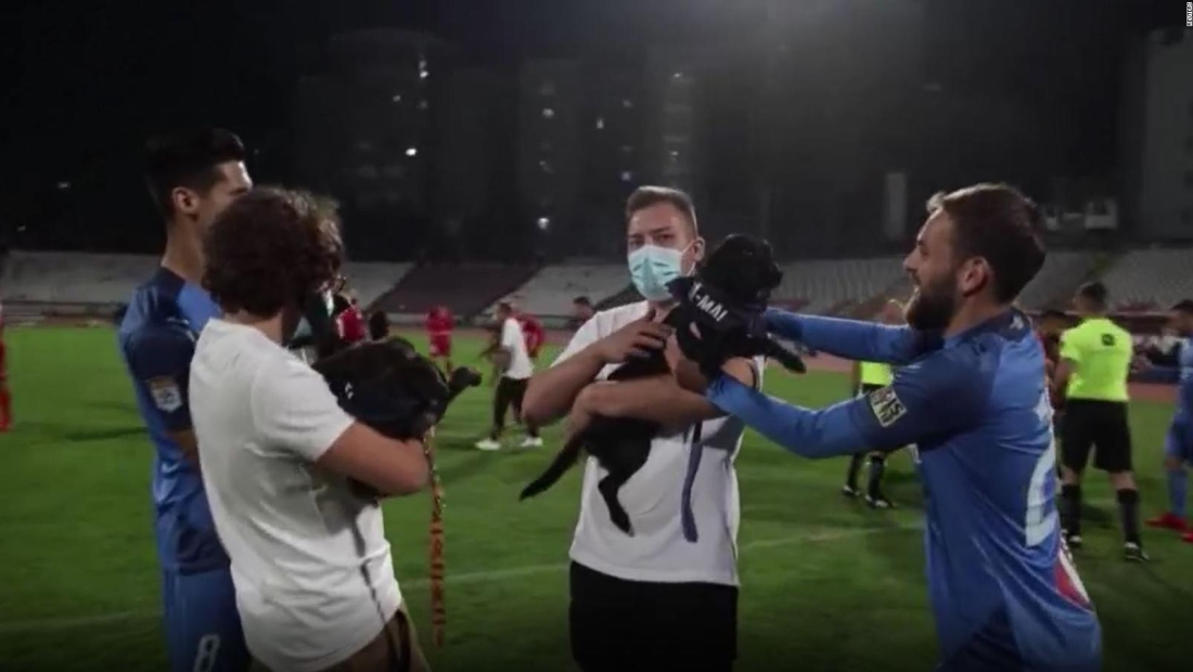 Estos perros llegan al corazón del fútbol en Rumania